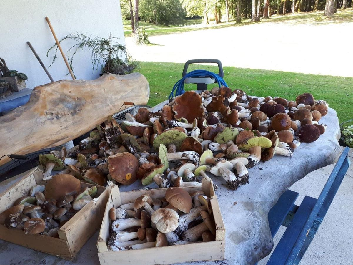 Initiation à la recherche des champignons Cêpes Girolles