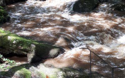 La Dronne – Rivière sauvage